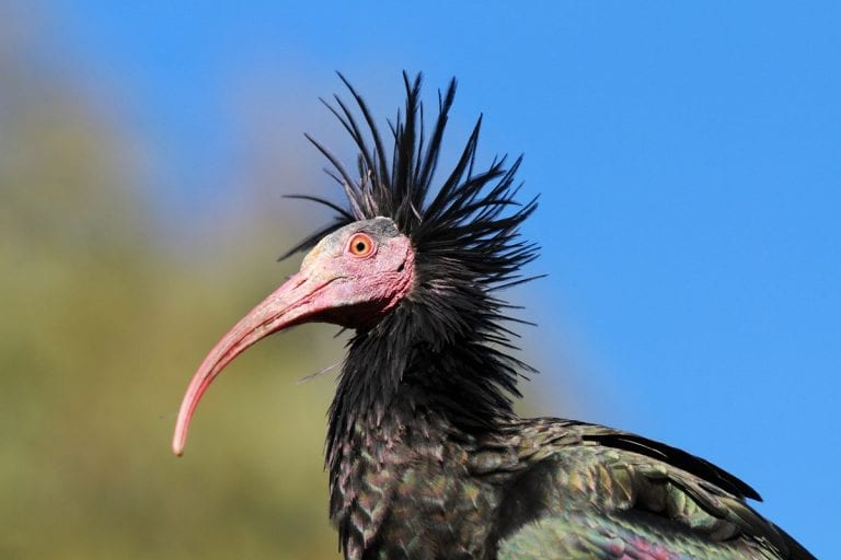 ibisworld online upoznavanje black ops 2 popravljanje šibica